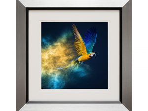 Rio Parrot Macaw Framed Artwork W50 x H50