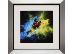 Marco W50 x H50 Abstract Parrot Macaw Framed Artwork