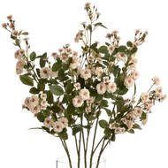 cream wild meadow rose stem top