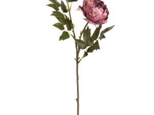 Dusty Pink Spray Rose Peony