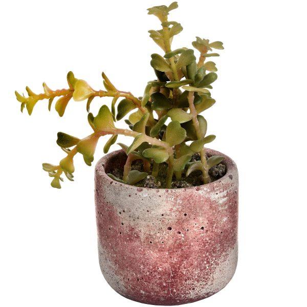 adur succulent