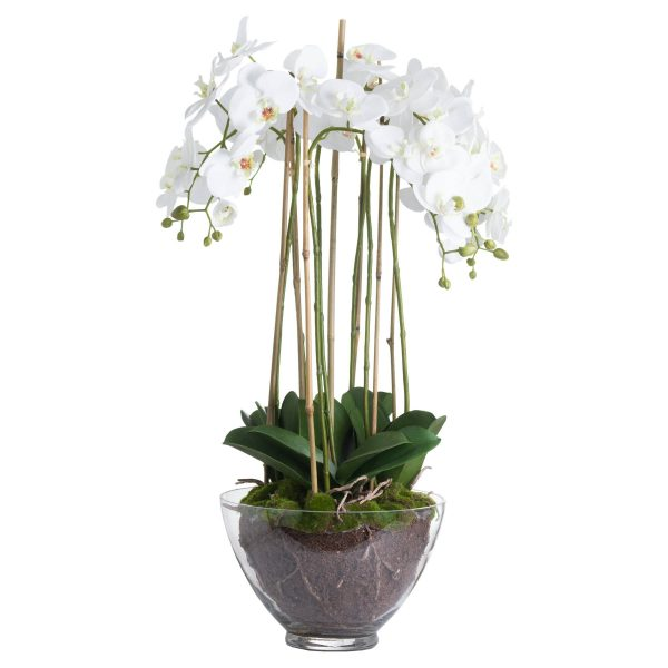 leet water orchid