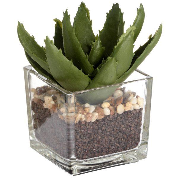 ribble aloe in glass pot