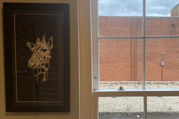 Framed Print Tall Tears Monochrome Giraffe Portrait